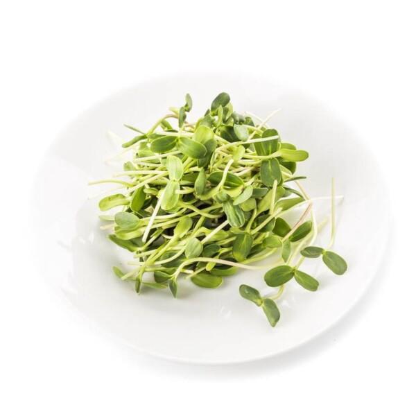 micro-zelen